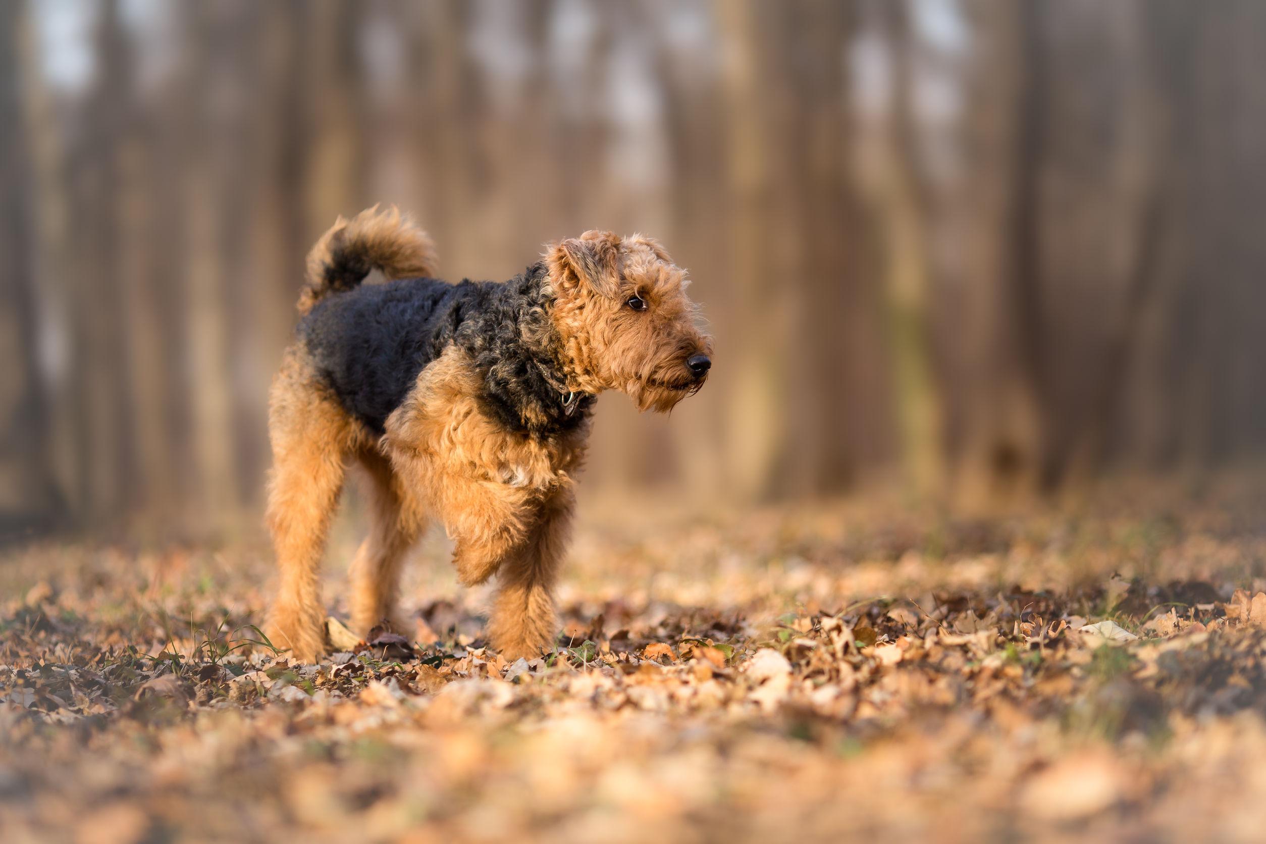 Czy Każdy Pies Gubi Sierść Maxandmraupl
