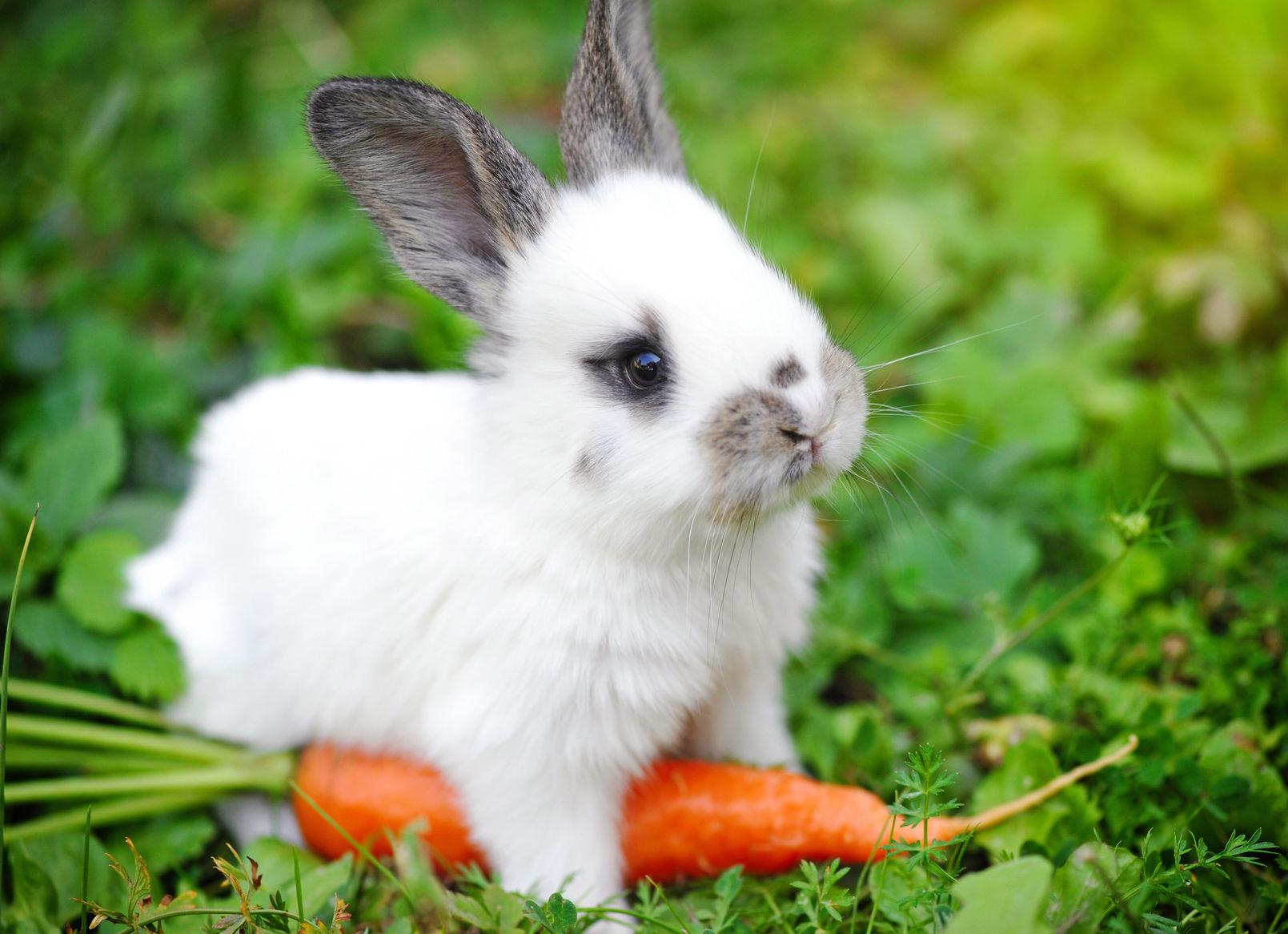 Czym żywić króliki miniaturki?| maxandmrau.pl