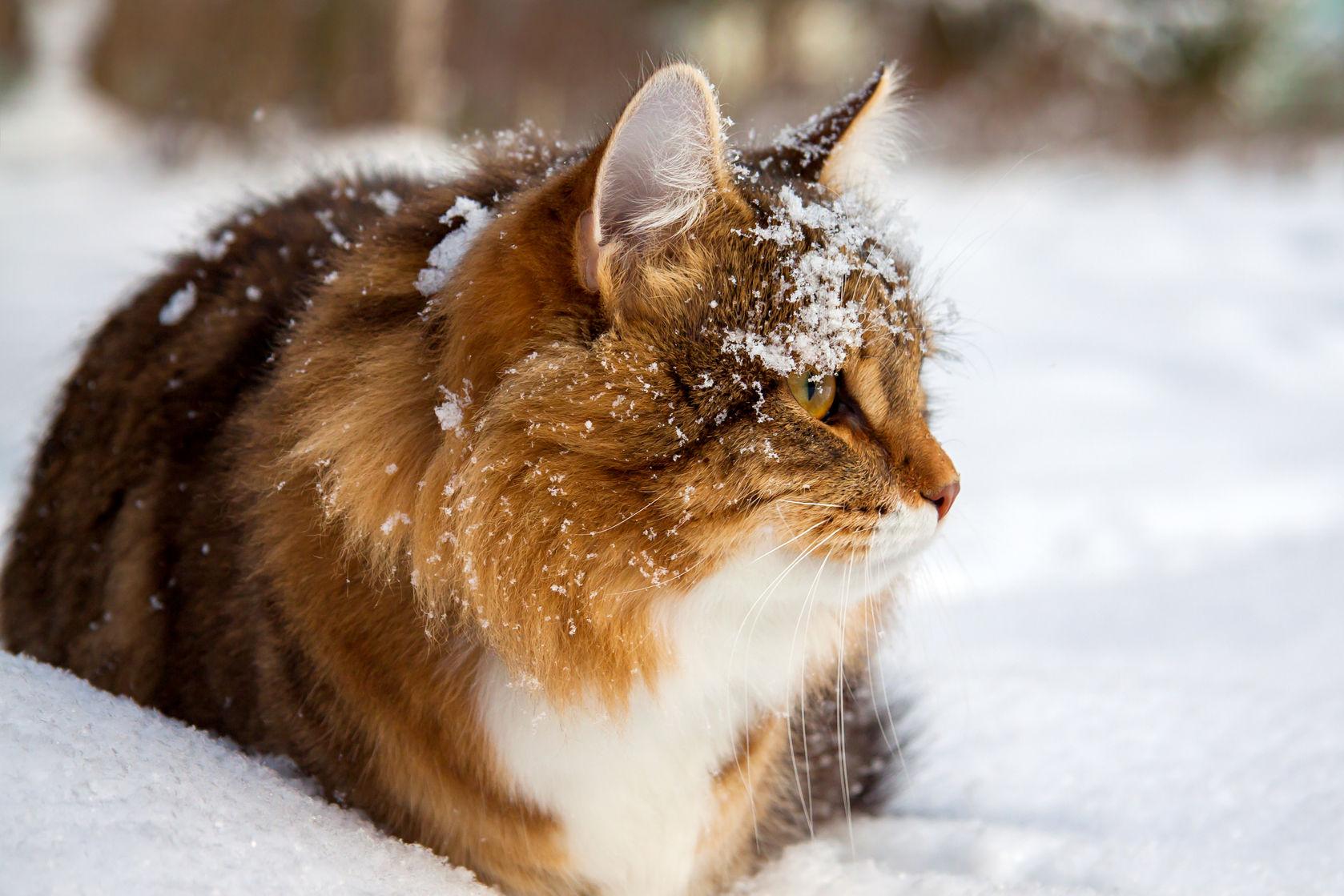 4ed48fe93a5e52 Domek dla kota - na zimę, na dwór, z kartonu. Jak zrobić ...