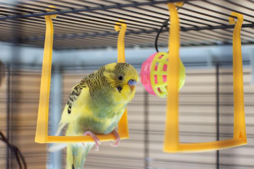 Zabawki Dla Papug Plac Zabaw Do Klatki Jak Zrobić